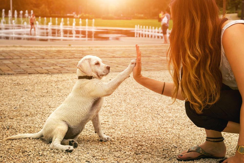 動物好きの心理と嫌いな人がうまく付き合う方法