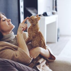 猫を飼いたい心理になった時~癒されたい人によいペットとは~