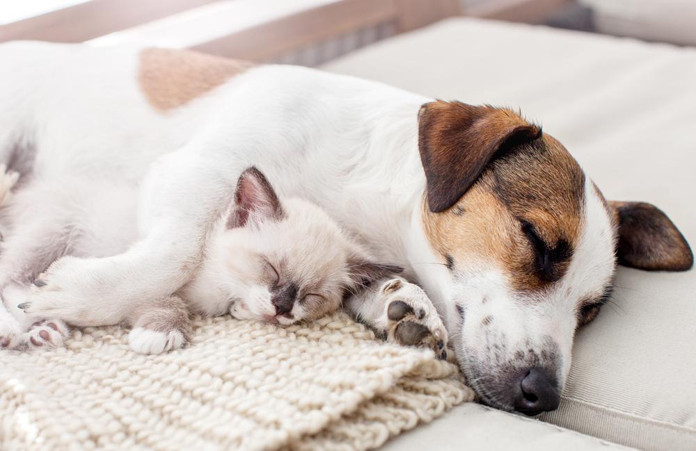 好きな動物でわかる心理!動物ごとのタイプで恋愛観を探ってみよう